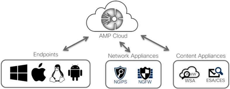 AMP Cloud